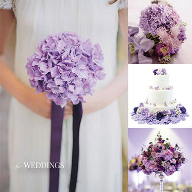 Painted Hydrangea, Glitter Lavender (15 stems)