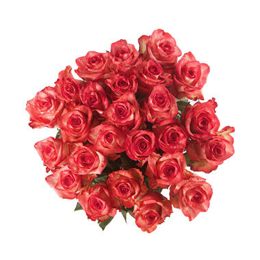 Rainforest Alliance Certified Roses, Novelty (100 stems)