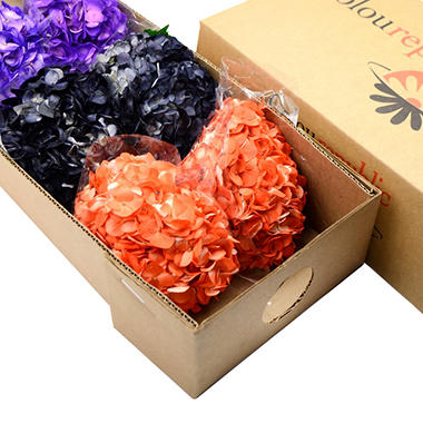 Painted Hydrangea - Orange, Black and Purple (choose 15 or 40 stems)