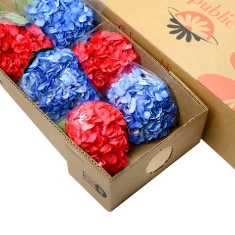 Painted Hydrangea, Red and Blue (choose 15 or 40 stems)