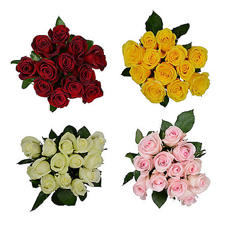 Dozen Rose, Assorted Colors (12 stems)