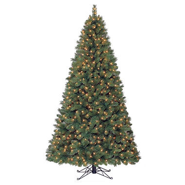 7' Camden Fir Pre-lit Quick Set Tree